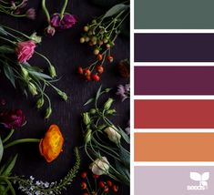 Colours Color Flora Design Seeds Lawn And Landscape Watering Tips Article Body: Fall Color Schemes, Fall Color Palette, Colour Pallette, Color Combos, Rustic Color Palettes, Color Combinations Home, Interior Design Color Schemes, Orange Color Schemes, Design Seeds