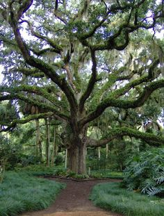 Amazing places to visit in Florida.  11. Washington Oaks Gardens State Park
