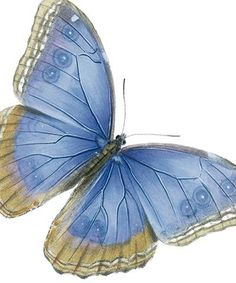 Blue Butterfly. From the Archivist Press, no artist credit available
