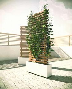 Mobile Vine Wall to Block Neighbour You are in the right place about Garden Types plants Here we off Garden Types, Backyard Patio, Backyard Landscaping, Patio Wall, Diy Patio, Landscaping Ideas, Privacy Fence Landscaping, Desert Backyard, Hydrangea Landscaping