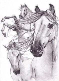 Horse drawings sketch_works: various drawings . Horse Drawings, Animal Drawings, Art Drawings, Pencil Drawings, Pencil Art, Mangaka Anime, Horse Sketch, Horse Anatomy, Horse Artwork