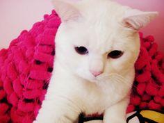 #cute #cat #morfeo