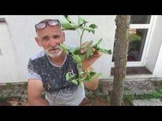 Rozmnażanie róży - YouTube Clematis, Ale, Youtube, Gardening, Instagram, Balcony, Lawn And Garden, Ale Beer, Youtubers