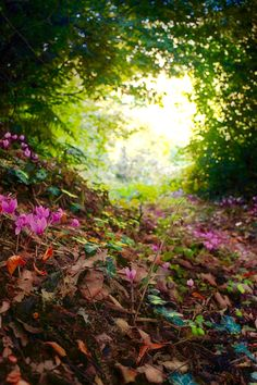 'First colours of autumn' ~ Makis Bitos