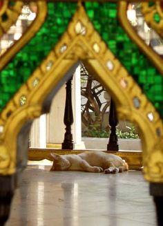 Cat sleeping in temple, Bangkok