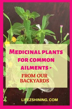 Medicinal plants for common ailments from backyards you can try most of them are effective remedies Phyllanthus Piper longum Biophytum Woodsorrel etc. Cough Medicine, Herbal Medicine, Small White Flowers, Purple Flowers, Herbal Remedies, Home Remedies, Garden Plants, Herb Garden, Vegetable Garden