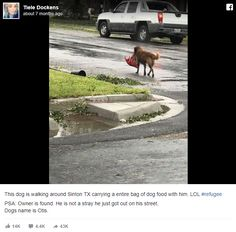 She Spots Missing Dog On Street, Jaw Drops When She Sees What He's Carrying In His Mouth Cute Animal Memes, Funny Animals, Animal Humor, German Shepherd Mix, Dog Stories, Funny Cats And Dogs, Bow Wow, White Kittens, Reasons To Smile