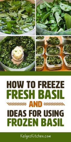 If you re growing basil in the garden or kitchen window this post can tell you How to Freeze Fresh Basil and give you Ideas for Using Frozen Basil I ve been freezing fresh basil for years and love having it in the freezer all year long found on Freezing Basil, Freezing Fresh Herbs, Preserve Fresh Herbs, Freezing Vegetables, How To Freeze Basil, How To Freeze Herbs, How To Preserve Basil, How To Dry Basil, Fresh Basil Recipes