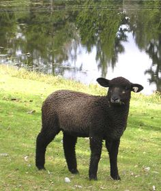 The black sheep disease- it's a strong one![<3 inside jokes!] :)