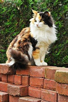 lovely calico on brock wall