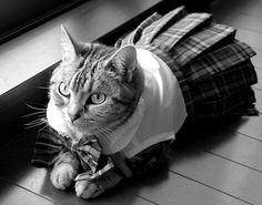 kitty in a kilt