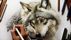 Speed Drawing of a Red Fox - Colored Pencil Artwork | Jasmina Susak - YouTube