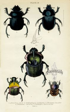 Jardine's Naturalist Library Insects
