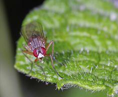 La mosca que se sale - Pentaxeros.com