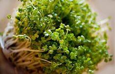Ma már tudjuk, hogy a legtöbb betegség ellenszere megtalálható a természetben. A daganatos betegségeké is. Broccoli Nutrition, Healthy Nutrition, Healthy Eating, Growing Sprouts, Coconut Milk Nutrition, Nutrition For Runners, Broccoli Sprouts, Sprouting Seeds, Holistic Nutritionist