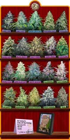 Awesome strains!