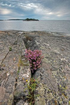 Porkkalanniemi Kirkkonummi Finland by Mustohe Summer Scenes, My Land, Archipelago, Best Cities, Vacation Destinations, The Great Outdoors, Wild Flowers, Norway, Places To Go