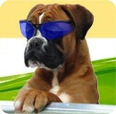 Hundepension Wien - Urlaub für Ihren Hund
