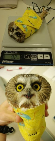 Oh my goodness, someone deliver this Owl Burrito to my house right now!
