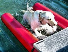 Shipping Now! Floating Dog Ramp for Boats, Docks and Pools - Pet Classics™