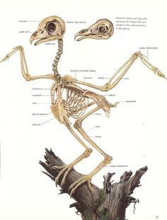 A sweet fuck-ton of owl references. Before anyone asks, yes, that skeleton at the top belongs to an owl. It's not a chicken, it's not a hawk, it's an owl. Owls are all puff and no bone. That's why they're the silent killers of birds. They blend in, swoop without sound… they're frickin' ninjas. [From various sources]