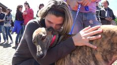 SOS Levrieri - 2 Maggio 2015 - Adozioni Greyhound