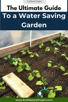 Do you want your garden to be beautiful and a water saving garden in the same time? It is possible! If you are looking for a water-saving garden, then this guide will help. We will discuss how to get a water saving garden and some tips on choosing more water-efficient plants. This post also includes information about devices that can reduce water use in your home or workplace. Green Living Tips, California Garden, Organic Matter, Water Conservation, Green Garden, Save Water, Irrigation, Native Plants, Compost