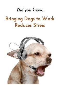 Bringing your dog to work can lower stress levels, increase productivity and make your job more satisfying!