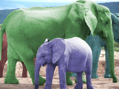 Color Elephants