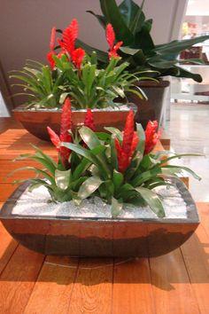 bromelis vermelha para decoracao de interiores