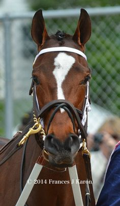Untapable -- 2014 Kentucky Oaks winner. What a gorgeous filly