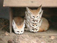 Poorly organized fox storage- hahaha! So sweet!