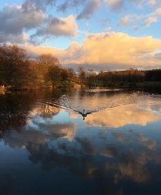 Glorious evening yesterday., and spotted a lot of wildfowl on the lake:Swan, Sebastopol Goose, mallard, Canada Geese, greylag geese, moorhens, coot. #lake #sunset #wildfowl #waterfowl #reflection ......#weddingvenue #barnwedding #browsholme #lancashire #wearelancashire #familyhome #sustainable #historic #heritage #rural #tourism #historichouse #lancashire #history #ribblevalley #forestofbowland #bride #weddingphotography #countryside #countrywedding #browsholmehall #rustic #rusticwedding…