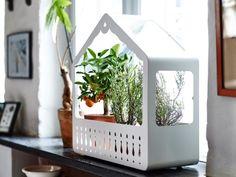 shabby chic kaktus and schick on pinterest. Black Bedroom Furniture Sets. Home Design Ideas