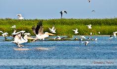 Sacalin Island, The Danube Delta