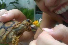 """Enjoy a snack, Mr. Turtle!"""