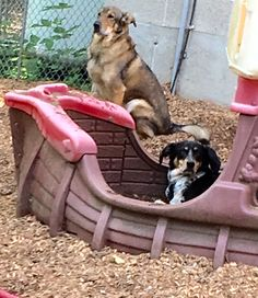 Oscar and Zoie man the ship! #DogAntics #DogLove #DoggieDaycare #DogGames