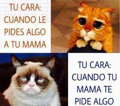 day memes in spanish Funny Cats, Funny Animals, Funny Jokes, Hilarious, Memes Humor, Cat Memes, Spanish Jokes, Funny Spanish Memes, Mexican Humor