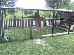 Easy to Make Outside Cat Enclosure with PetSafe Dog Kennels and Our Four Adopted Cats