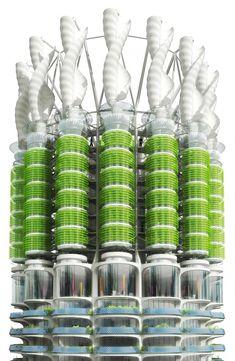 Algae Green Loop (7)