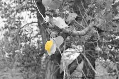 Signs of Fall by ARphotographyStudio on Etsy