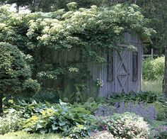 Give climbing hydrangea a spot in part to full shade and a sturdy support to climb on. This vine is great at scaling walls and other structures because roots grow from the stems and cling to a surface. Be sure to give climbing hydrangea moist, well-draine Hydrangea Tree, Climbing Hydrangea, Hydrangea Garden, Garden Shrubs, Hydrangeas, Hydrangea Shade, Garden Soil, Front House Landscaping, Shade Landscaping