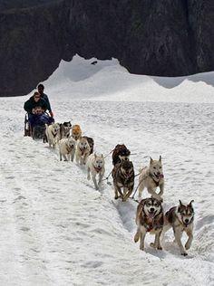 Dog sledding in Alaska