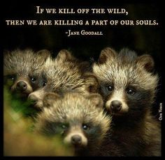 If we kill off the wild, then we are killing a part of our souls--Jane Goodall: