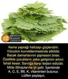 Sağlık Viera, Lettuce, Celery, Cabbage, Health Fitness, Hair Beauty, Herbs, Vegetables, Tips
