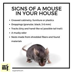 44 Best Fun Pest Facts Images Bed Bugs Treatment Crazy
