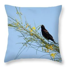 Red Winged Black Bird On A Retama Tree Throw Pillow by Debra Martz #Redwinged #Blackbird in #Retama #tree www.debramartz.com
