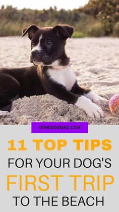 Most dogs love the beach, but it can be a little daunting if you're taking them to the seaside for the first time. There's a lot to bear in mind to ensure your dog's first beach trip is a safe and fun experience.  If you're heading out on your first beach trip, read my 11 top tips to make sure you're prepared for a great day out.  #DogFriendly #DogHacks #DogBeachTips #DogOwnerTips #DogTips #DogCare via @GoneDogMad1 Pet Care Tips, Dog Care, Pet Tips, Puppies Tips, Dogs And Puppies, Doggies, Dog Safety, Safety Tips, Taking Dog