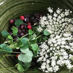 @whisk_Fazenda productive foraging for the win! Wild black raspberry wild dill and wood sorrel flowers. #PotsInAction #ClayForageCollab by bostonpotter
