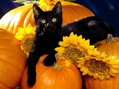Black Cat on a Pumpkin - autumn, cat, fall,  pumpkin, sooooooo cute